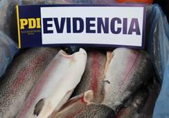 Decomisan cinco toneladas de salmón sin cadena de frío ni documentación