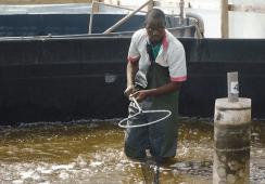 GAA aquaculture innovation award deadline extended