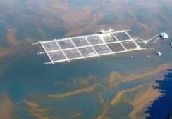 Informe ONU: Acuicultura está vinculada con proliferación de algas nocivas