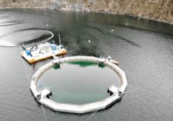 FiiZK levererer to lukkede merder til Hiddenfjord
