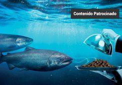 Una nueva generación de realzadores de palatabilidad para alimentos