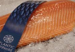 Megaproyecto Atlantic Sapphire obtiene precios récord para su salmón