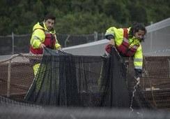 Nuevo reporte destaca mantención de empleos en salmonicultura pese a covid-19