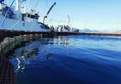 Norcod fullfører overføring av 2,4 millioner fisk til sjøanlegg