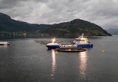 Ny torskelokalitet: To av fire godkjenninger på plass