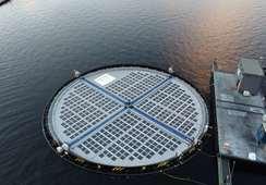 Marcarán la diferencia en salmonicultura con tecnología de células solares
