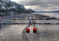 Organizaciones piden terminar con concesiones salmonicultoras en áreas protegidas