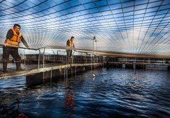 ¿En qué utilizará Salmones Camanchaca los recursos de su aumento de capital?