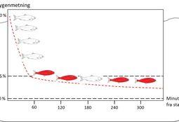 Laks med HSMB er mer følsom for lave oksygennivåer i vannet