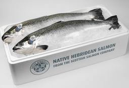 Record revenues for Scottish Salmon Company