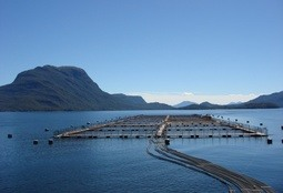 Mussels and salmon top Chile aquaculture harvest