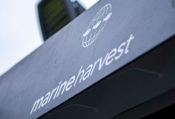 Marine Harvest makes €177m in last quarter of 2017