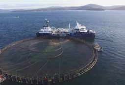 Future mapped out for Tasmania's salmon industry
