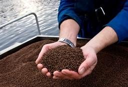 Kartlegging av tarmbakterier skal gi optimalt fôr og bedret fiskehelse