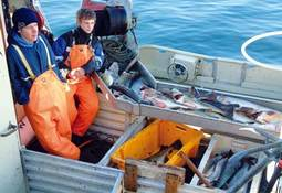 Rekruttering i fiskeflåten – etablering som fartøyeier