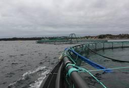 Fiskehelsepersonell skal ha adgang til oppdrettsanlegg også under koronautbruddet