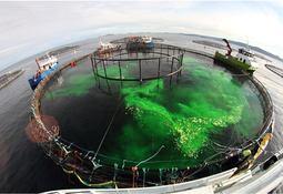 Ber brønnbåtene holde avlusningsvannet unna rekefeltene