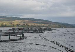 Bakkafrost kjøper seg opp i Skottland