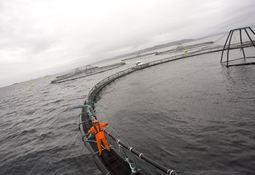 Grieg Seafood Finnmark aksepterer inndragningsforelegg
