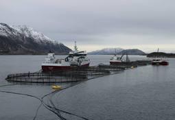 Svakere år for Seløy Sjøfarm
