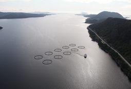 Slik er den marine påvirkningen fra lakseoppdrett
