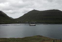 Vil ha rognkjeks i alle merdene på Færøyene