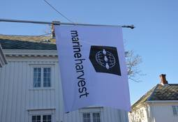 Mistanke om ILA hos Marine Harvest i Nordland