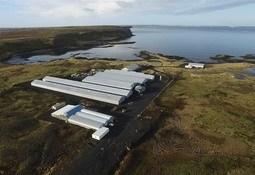 Island vokser i det norske rognmarkedet