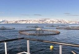 Fiskeridirektoratet har ferdigbehandlet alle utviklingstillatelser