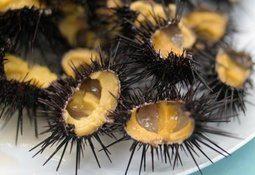 Norsk forskning redder japanske kråkeboller