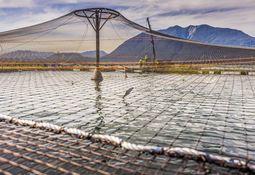 Chilenske oppdrettere får ASC- sertifisering
