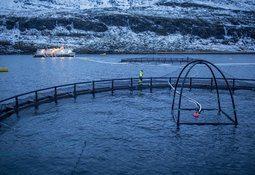 Millioner til lakseforskning i Finnmark