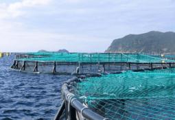 Fish Vet Group satser stort