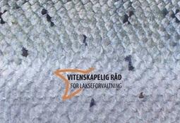 Klassifisering av 104 laksebestander etter kvalitetsnorm for villaks