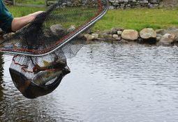 – Gjenstår avklaringer på tiltaksplan for vill laksefisk