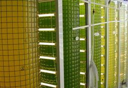 Tester om algefôr kan gi mindre lusepåslag hos laks