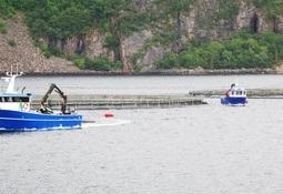 Setter i verk tiltak for å hindre rømt fisk i vassdraga i Hardanger under gytetida