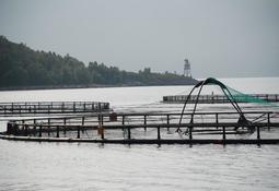 Styrker samarbeidet om havbruksforvaltning
