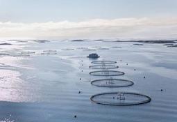 Havforskningsinstituttet støtter forslag om produksjonsområder