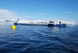 Finner få rømlinger fra Salmar Nord