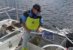 Fisket etter leppefisk åpnet mandag og er i full gang