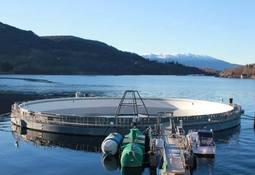 MH har utsatt produksjon i verdens største lukkede merd i sjø