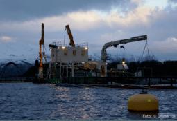Snart klar med analyse av fiskevelferd og effekt av mekanisk avlusing