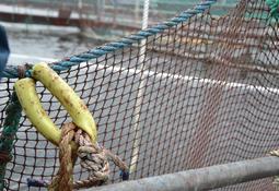 Over 10 000 fisk på rømmen etter båtkrasj