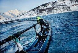 Grieg med lus i utlandet og fortjeneste i Norge
