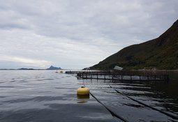 Kvarøy Fiskeoppdrett vil ASC-sertifisere og dele driftsinformasjon med allmennheten