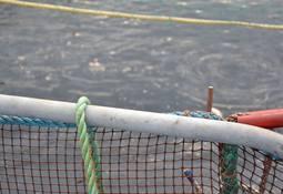 Fiskehelserapporten 2016 lansert