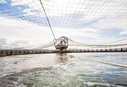 Tasmania: Campaña busca informar sobre malas prácticas de la salmonicultura