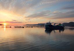 ILA preget 2016-resultatene til Kvarøy Fiskeoppdrett