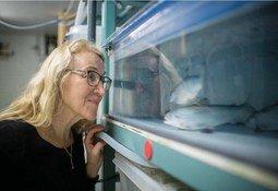 Ikke-medikamentelle metoder gir betydelig dødelighet, mener fiskehelsepersonell